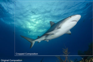 Shark Photography Composition