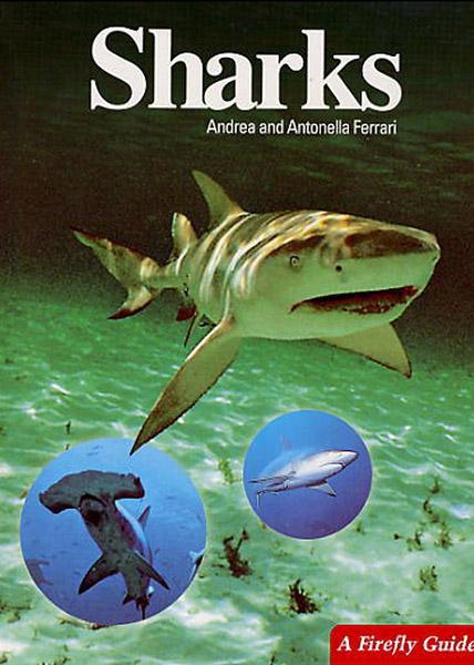 Sharks Andrea and Antonella Ferrari